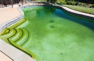 Tại sao hồ bơi của tôi vẫn xanh sau khi thêm clo?